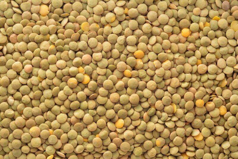 Organic Laird, Eston, Richlea Lentils